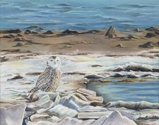 Snowy on gull Point by Toni Kelly